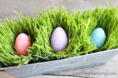 how to grow easter grass fast!.jpg